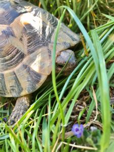 Naturfotos Schildkröte